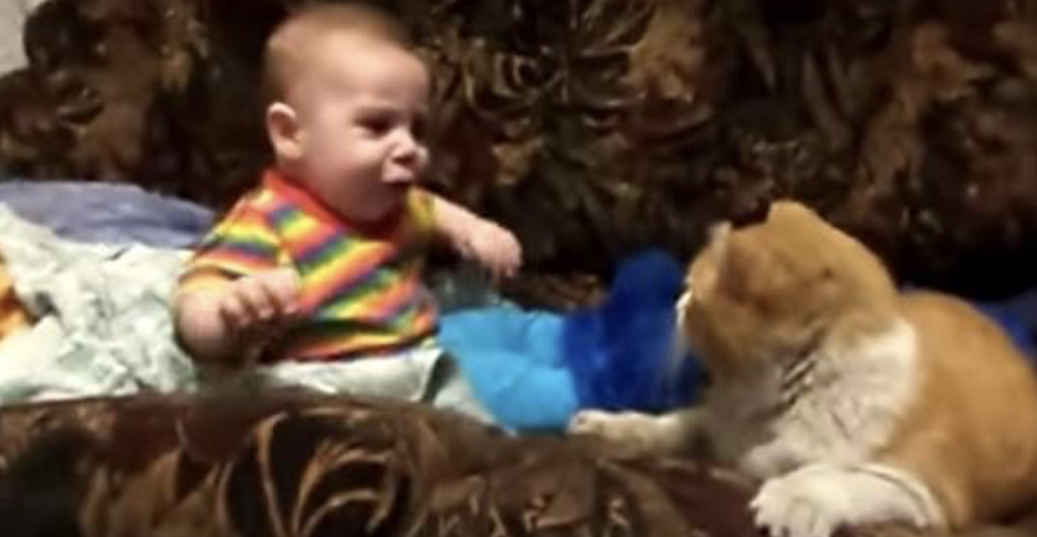 Mom couldn't get baby to sleep, then family cat steps in ...